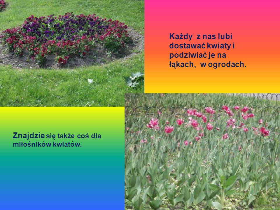 Znajdzie się także coś dla miłośników kwiatów. Każdy z nas lubi dostawać kwiaty i podziwiać je na łąkach, w ogrodach.