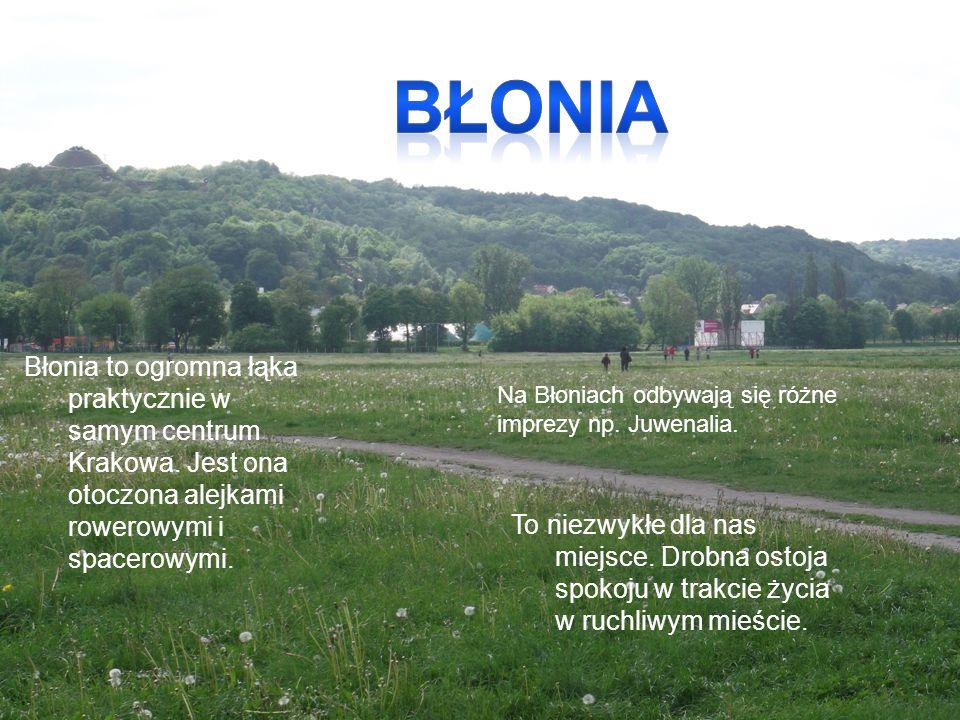 Błonia to ogromna łąka praktycznie w samym centrum Krakowa. Jest ona otoczona alejkami rowerowymi i spacerowymi. To niezwykłe dla nas miejsce. Drobna