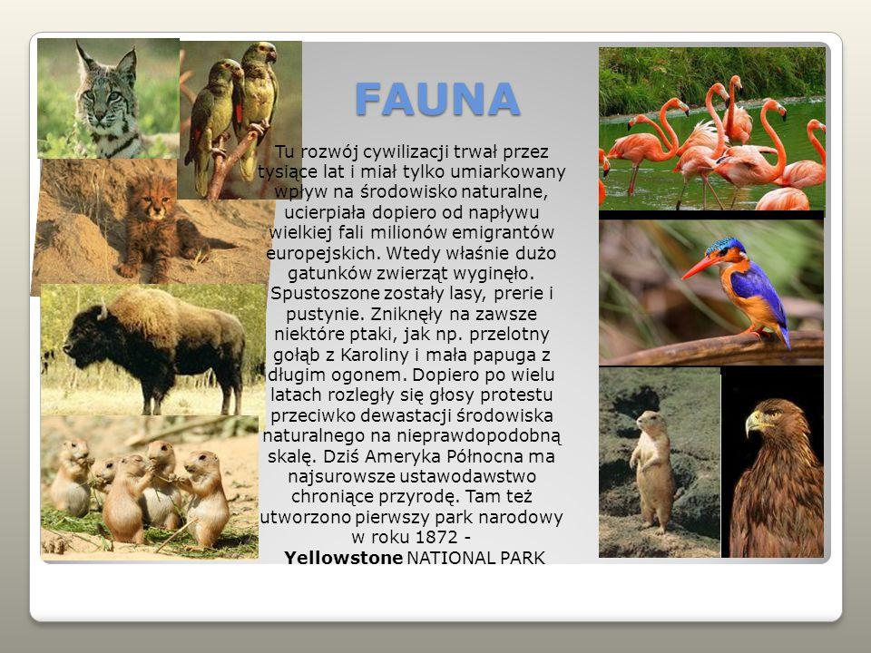 FAUNA Tu rozwój cywilizacji trwał przez tysiące lat i miał tylko umiarkowany wpływ na środowisko naturalne, ucierpiała dopiero od napływu wielkiej fali milionów emigrantów europejskich.