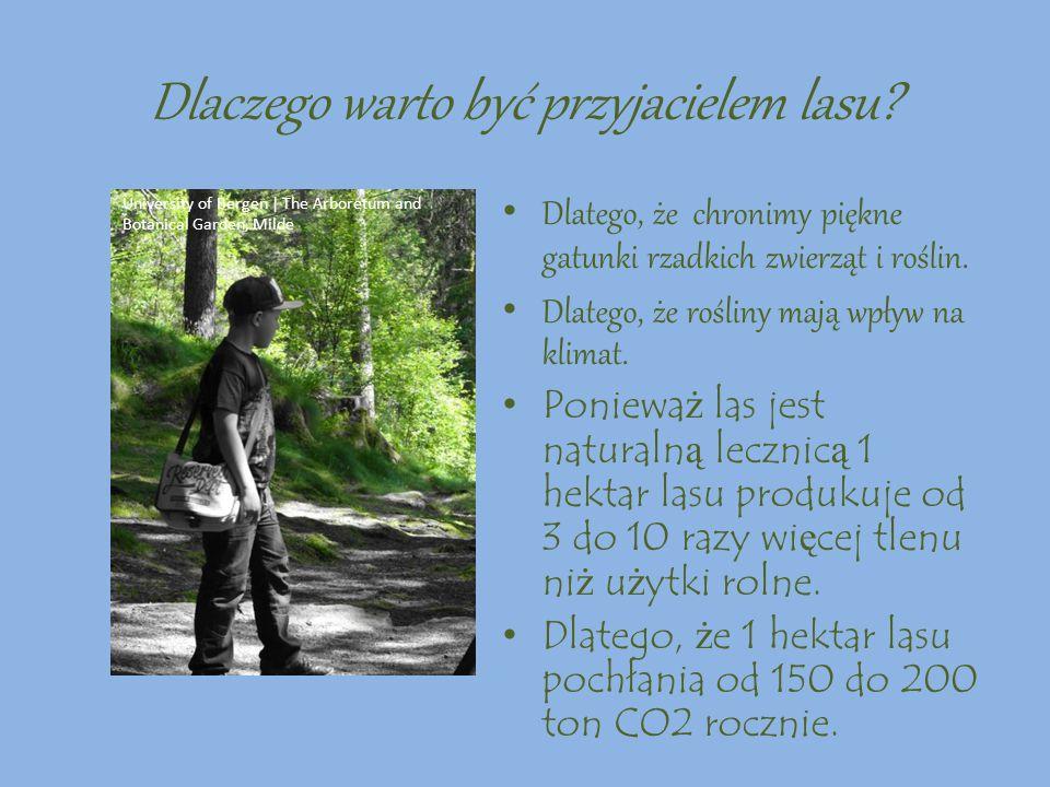 Kto jest Przyjacielem lasu? Przyjacielem lasu jest: Ktoś kto sprząta las i nie zaśmieca go. Ktoś kto pomaga sadzić drzewa i dokarmiać zwierzęta. Ktoś