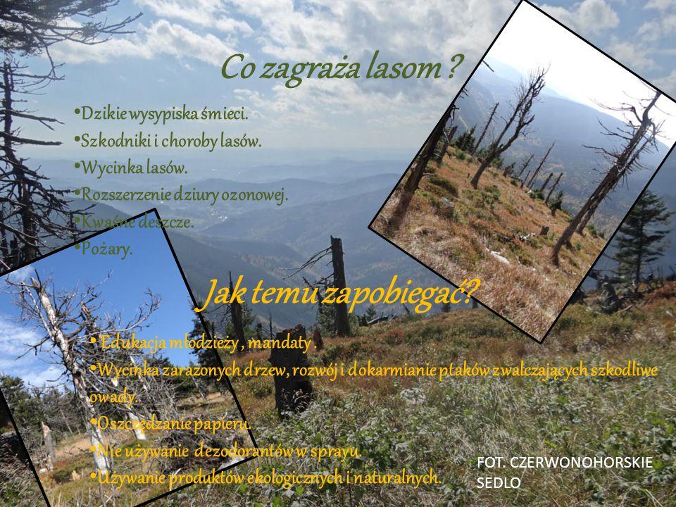 Co jeszcze daje nam las? Oprócz drewna lasy dostarczają nam: kauczuk, żywice, korek, olejki, oraz: zwierzyny łowne, jagody, jeżyny, grzyby, orzechy. F