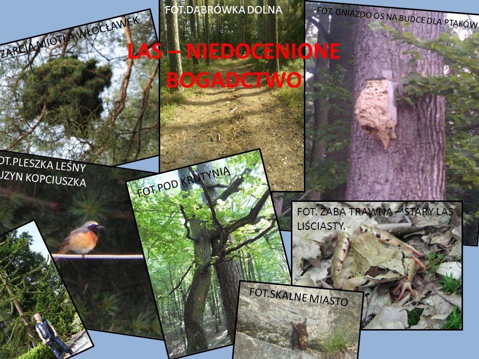 Co zagraża lasom ? Dzikie wysypiska śmieci. Szkodniki i choroby lasów. Wycinka lasów. Rozszerzenie dziury ozonowej. Kwaśne deszcze. Pożary. Jak temu z