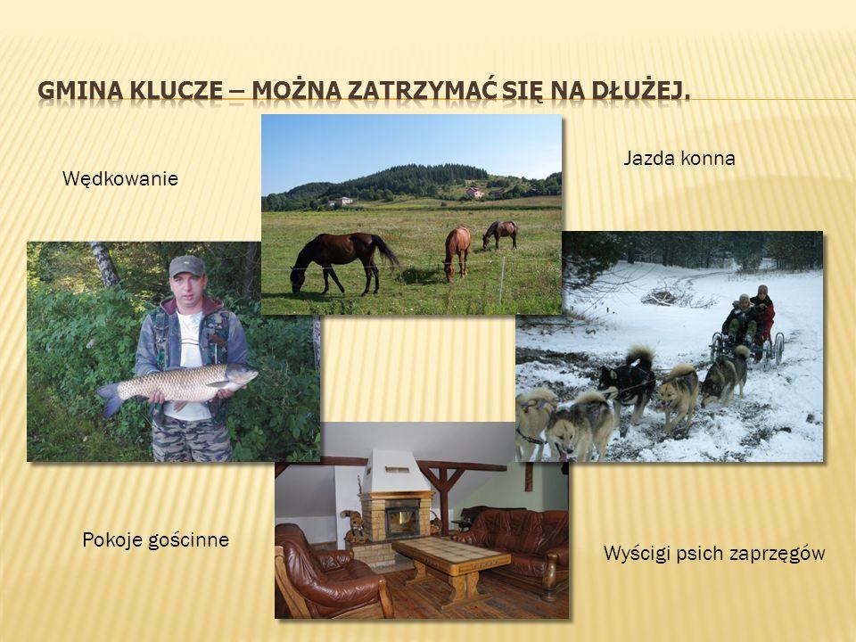 Rowerowy i pieszy Szlak Orlich Gniazd oraz kilka lokalnych tras turystycznych.