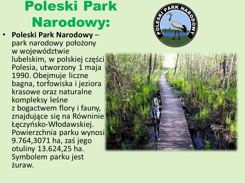 Poleski Park Narodowy: Poleski Park Narodowy – park narodowy położony w województwie lubelskim, w polskiej części Polesia, utworzony 1 maja 1990. Obej