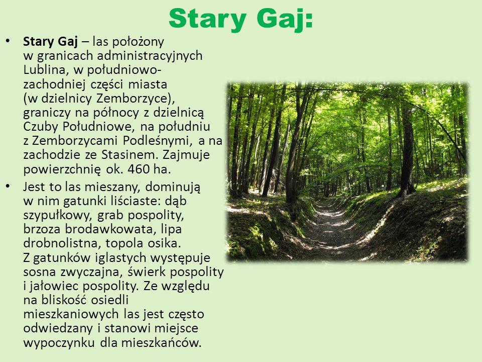 Stary Gaj: Stary Gaj – las położony w granicach administracyjnych Lublina, w południowo- zachodniej części miasta (w dzielnicy Zemborzyce), graniczy n