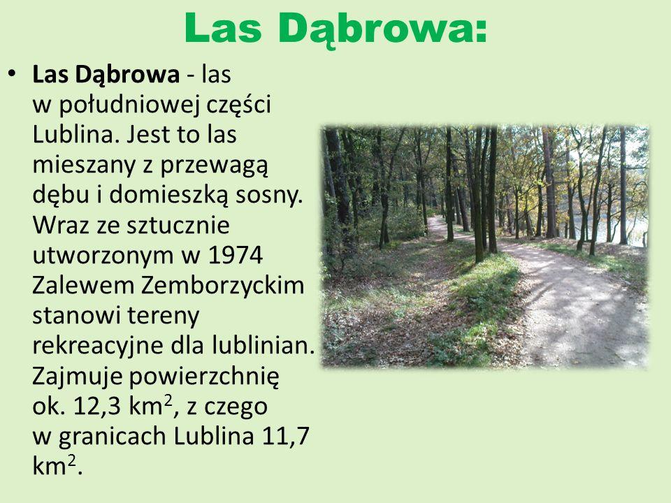 Las Dąbrowa: Las Dąbrowa - las w południowej części Lublina. Jest to las mieszany z przewagą dębu i domieszką sosny. Wraz ze sztucznie utworzonym w 19