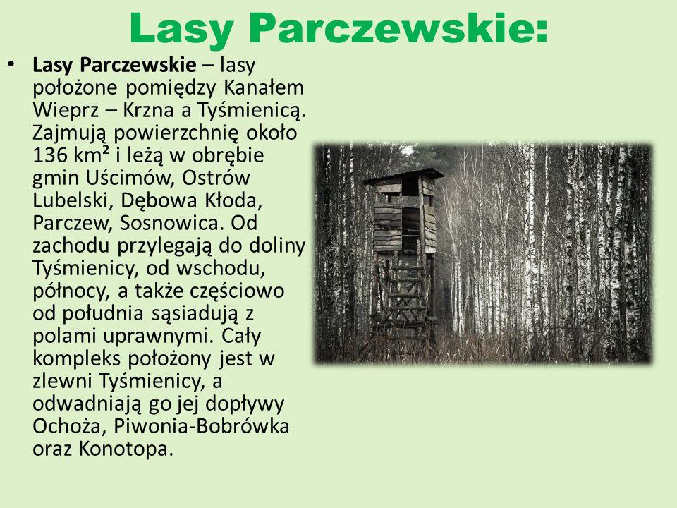 Lasy Janowskie: Lasy Janowskie – wielki obszar leśny położony w północnej części Kotliny Sandomierskiej, na pograniczu województw: lubelskiego i podkarpackiego.