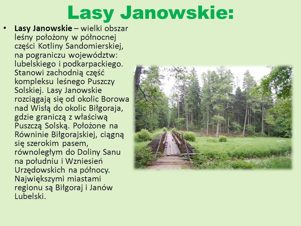 Lasy Janowskie: Lasy Janowskie – wielki obszar leśny położony w północnej części Kotliny Sandomierskiej, na pograniczu województw: lubelskiego i podka