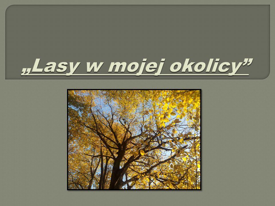  Kumowa Dolina – las na przedmieściach Chełma przy trasie na Krasnystaw, miejsce egzekucji ofiar Akcji AB.
