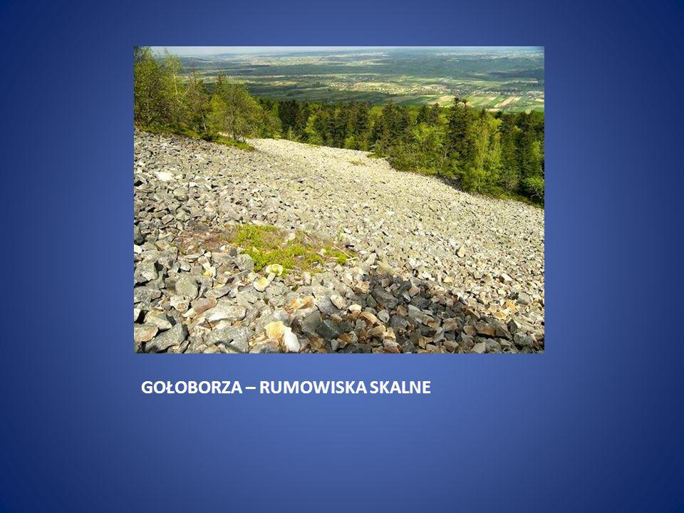 ŁYSA GÓRA – 595 m n.p.m.