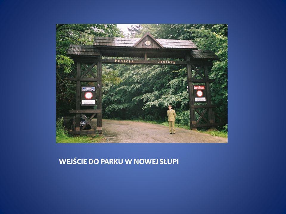 Świętokrzyski Park Narodowy powstał w 1950 r.Ma ponad 7 i pół tysiąca ha powierzchni.
