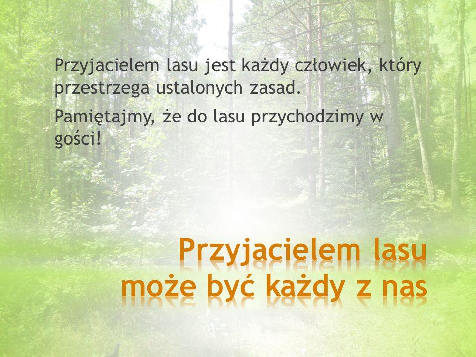 Przyjacielem lasu jest każdy człowiek, który przestrzega ustalonych zasad.