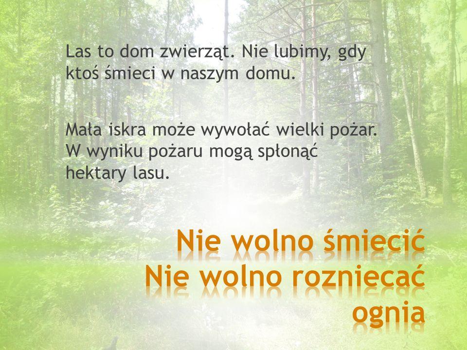 Przyjacielem lasu jest każdy człowiek, który przestrzega ustalonych zasad. Pamiętajmy, że do lasu przychodzimy w gości!