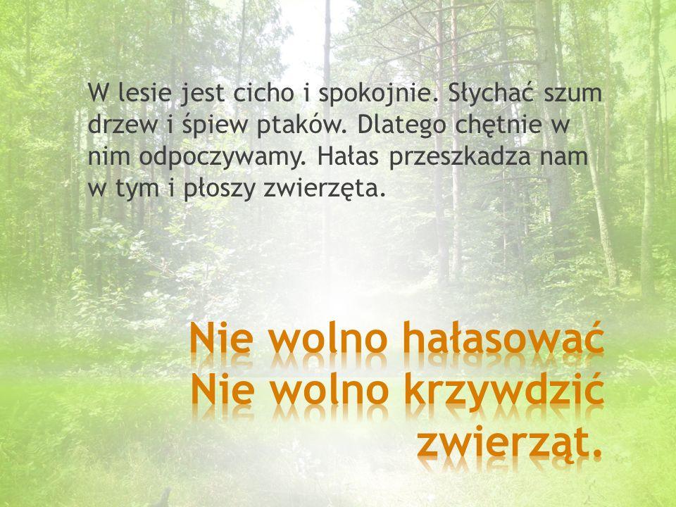 W lesie jest cicho i spokojnie.Słychać szum drzew i śpiew ptaków.