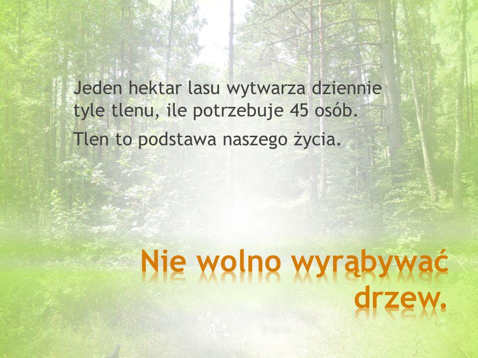Jeden hektar lasu wytwarza dziennie tyle tlenu, ile potrzebuje 45 osób.