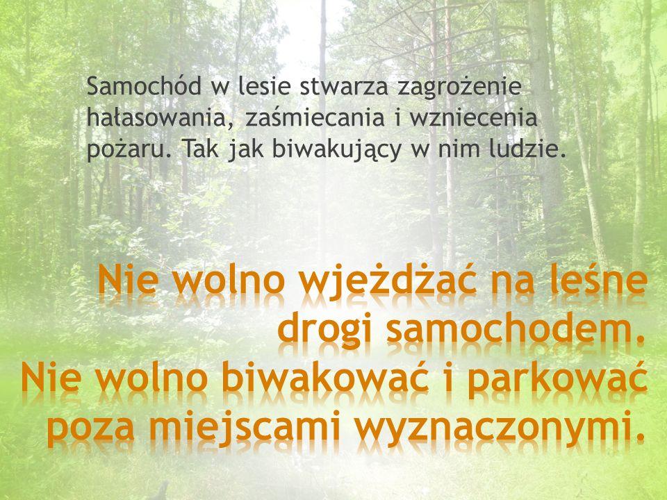 Jeden hektar lasu wytwarza dziennie tyle tlenu, ile potrzebuje 45 osób. Tlen to podstawa naszego życia.
