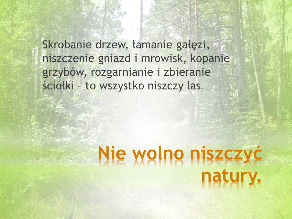Skrobanie drzew, łamanie gałęzi, niszczenie gniazd i mrowisk, kopanie grzybów, rozgarnianie i zbieranie ściółki – to wszystko niszczy las.