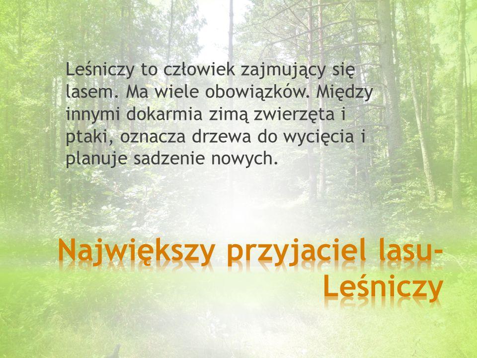 Leśniczy to człowiek zajmujący się lasem.Ma wiele obowiązków.