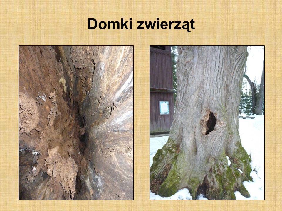 Sprzymierzeńcy leśników: ptaki leśne Las jest narażony na niszczycielskie działanie owadów szkodliwych.