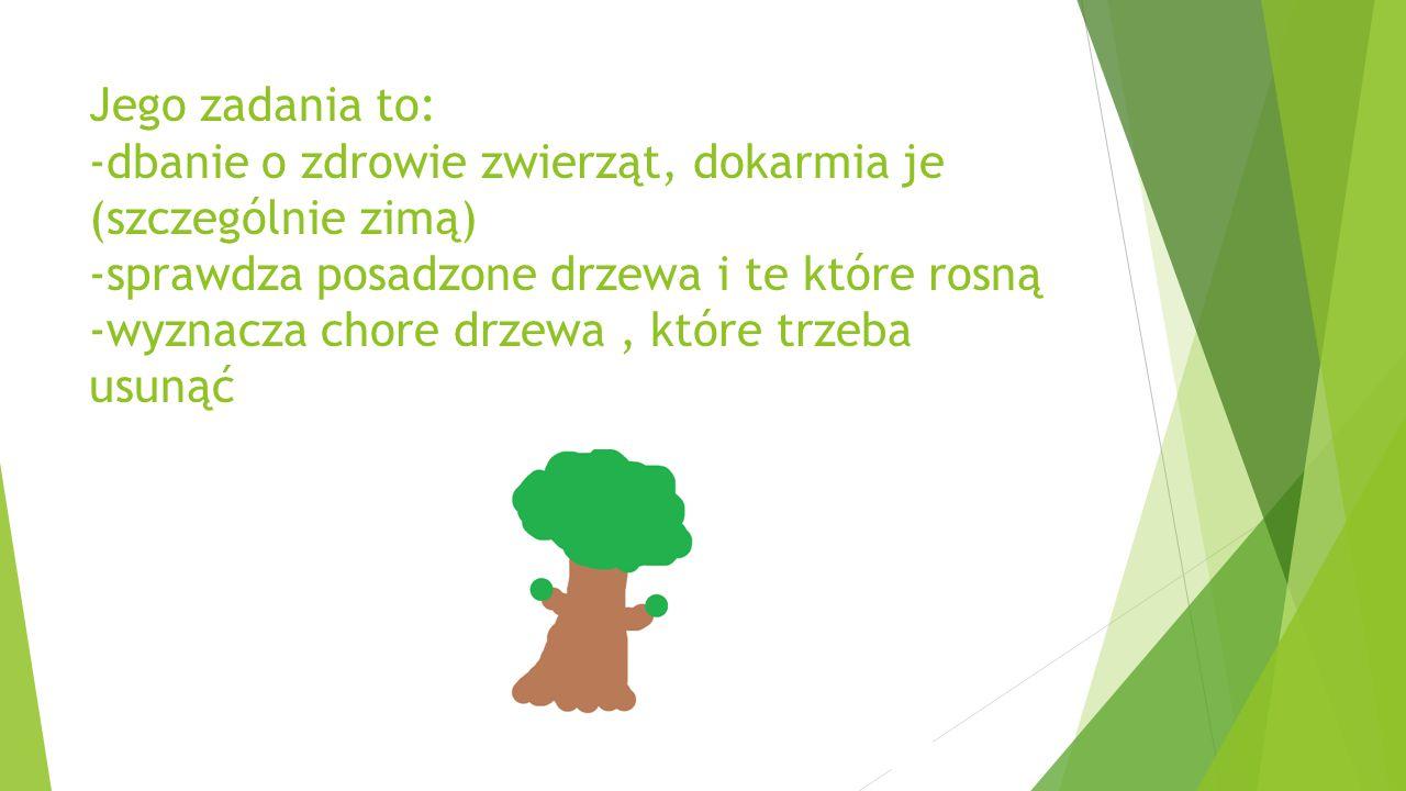 Jego zadania to: -dbanie o zdrowie zwierząt, dokarmia je (szczególnie zimą) -sprawdza posadzone drzewa i te które rosną -wyznacza chore drzewa, które trzeba usunąć