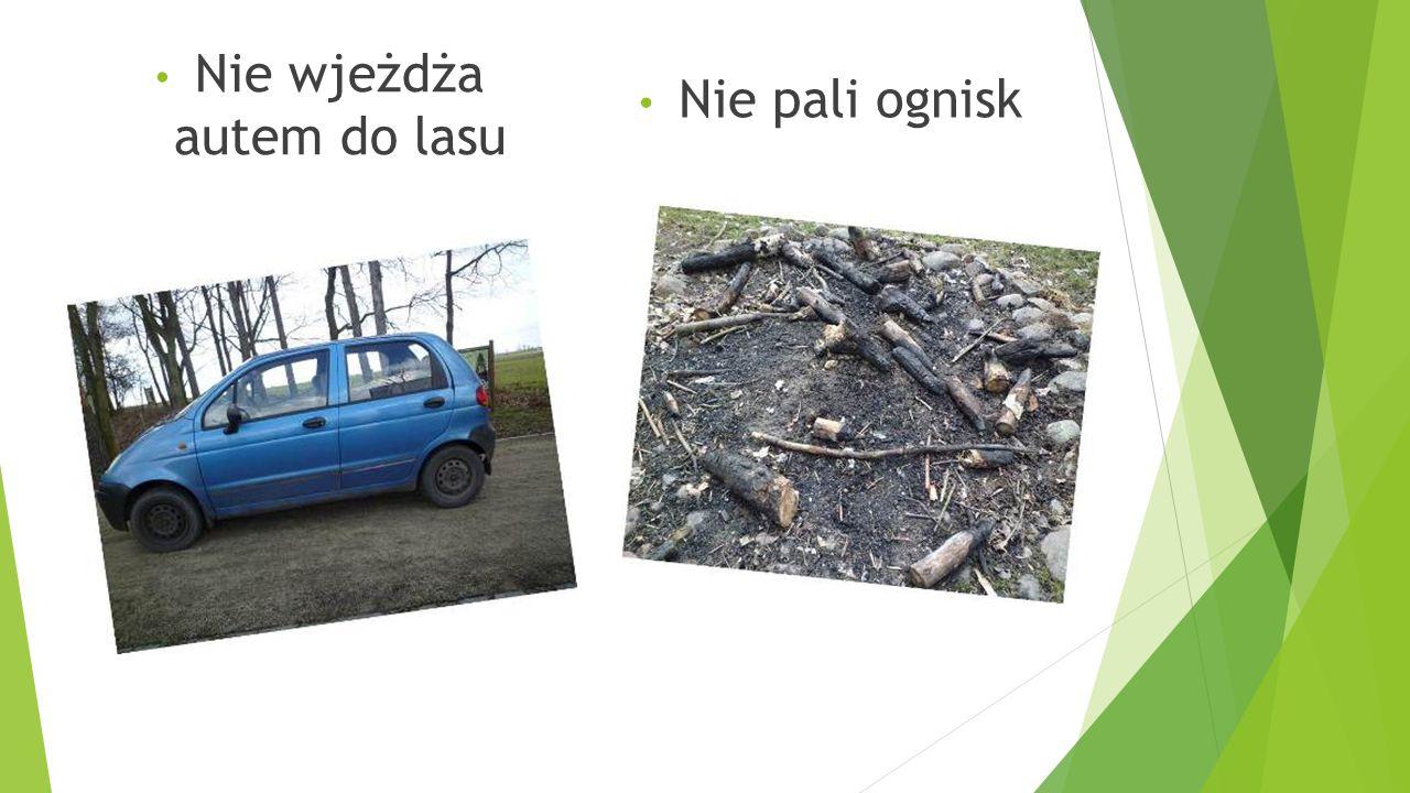 Nie wjeżdża autem do lasu Nie pali ognisk