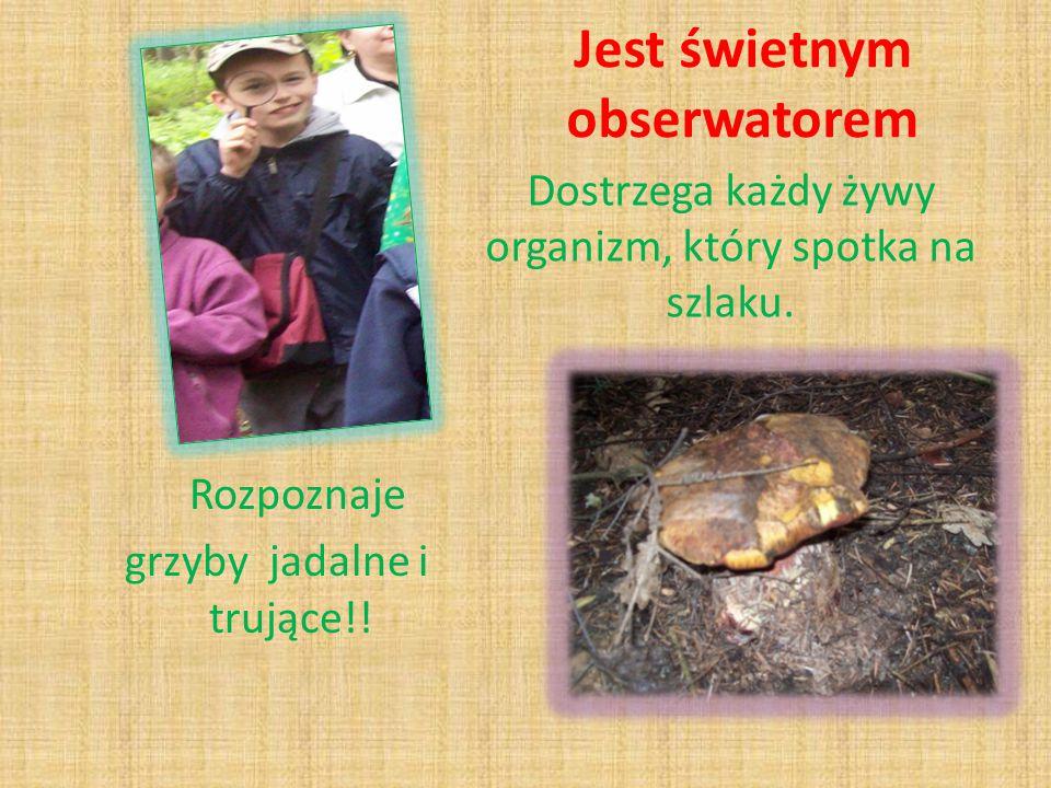 Jest świetnym obserwatorem Rozpoznaje grzyby jadalne i trujące!.