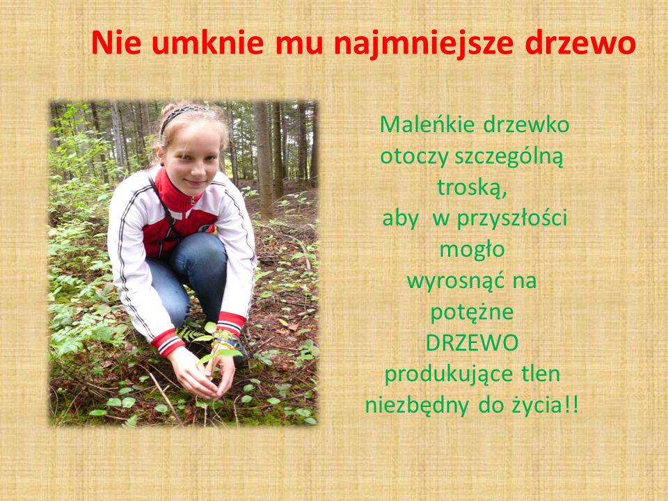 Nie umknie mu najmniejsze drzewo Maleńkie drzewko otoczy szczególną troską, aby w przyszłości mogło wyrosnąć na potężne DRZEWO produkujące tlen niezbędny do życia!!