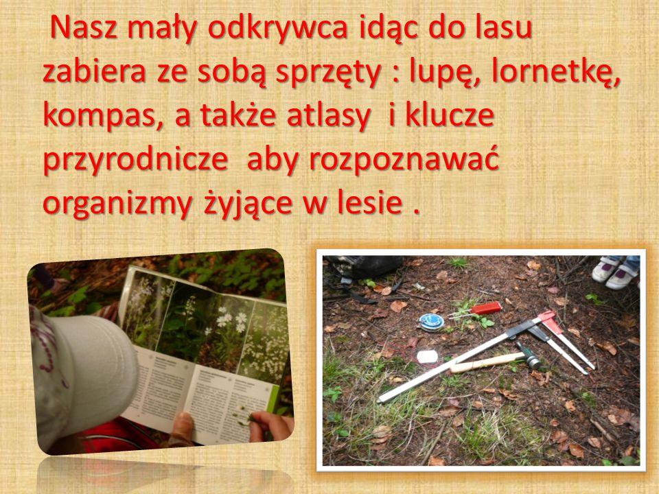 Nasz mały odkrywca idąc do lasu zabiera ze sobą sprzęty : lupę, lornetkę, kompas, a także atlasy i klucze przyrodnicze aby rozpoznawać organizmy żyjące w lesie.