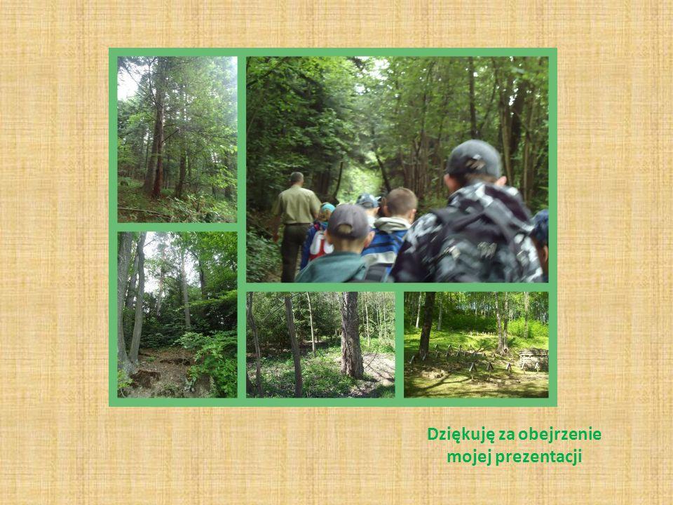 A także przyjaciółmi lasu są zwierzęta Las istnieje dzięki zwierzętom, które mu pomagają. Należy do nich dzięcioł – leśny lekarz, mrówka sanitariuszka
