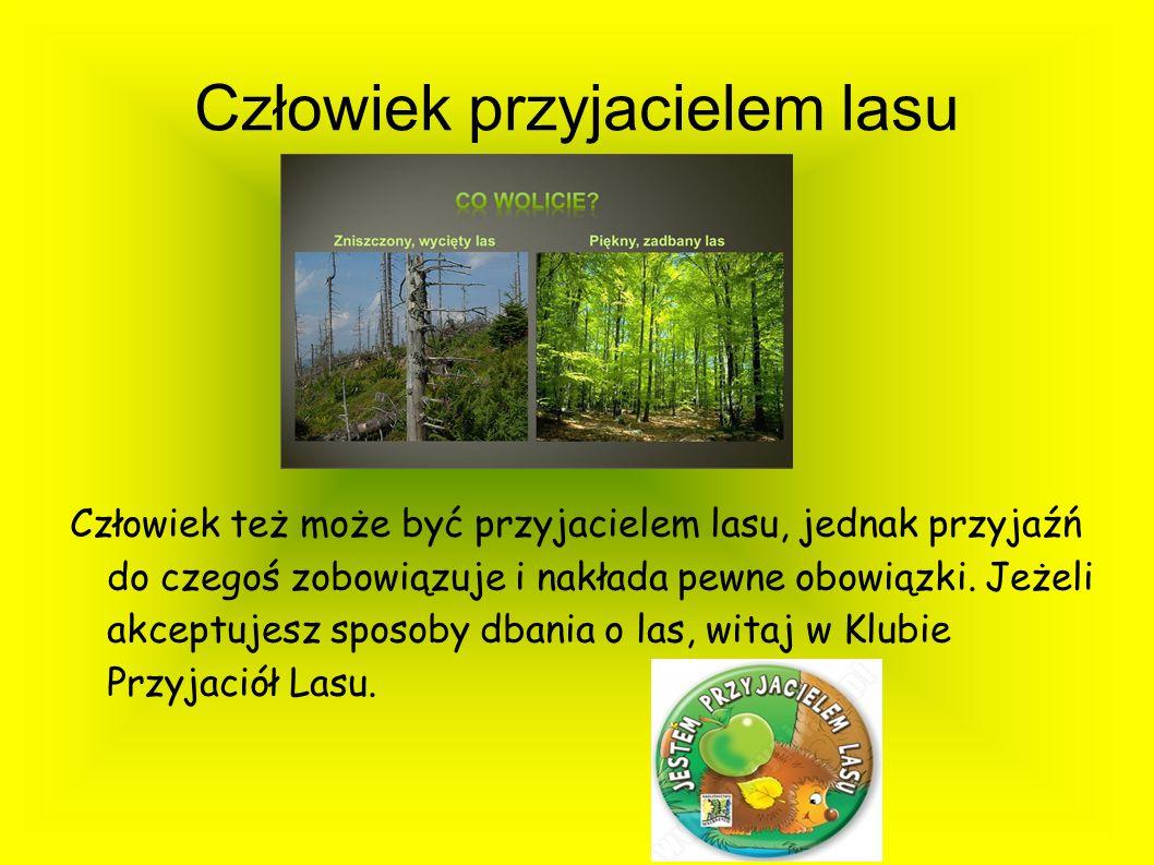 Człowiek przyjacielem lasu Człowiek też może być przyjacielem lasu, jednak przyjaźń do czegoś zobowiązuje i nakłada pewne obowiązki. Jeżeli akceptujes