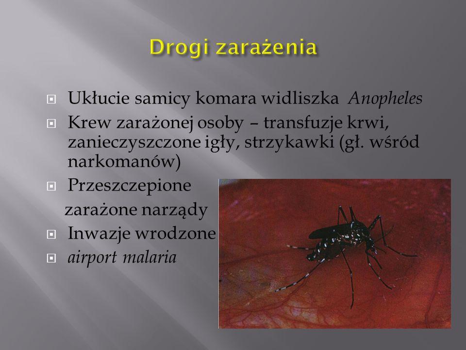  Ukłucie samicy komara widliszka Anopheles  Krew zarażonej osoby – transfuzje krwi, zanieczyszczone igły, strzykawki (gł.