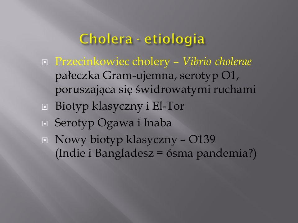  Przecinkowiec cholery – Vibrio cholerae pałeczka Gram-ujemna, serotyp O1, poruszająca się świdrowatymi ruchami  Biotyp klasyczny i El-Tor  Serotyp Ogawa i Inaba  Nowy biotyp klasyczny – O139 (Indie i Bangladesz = ósma pandemia?)