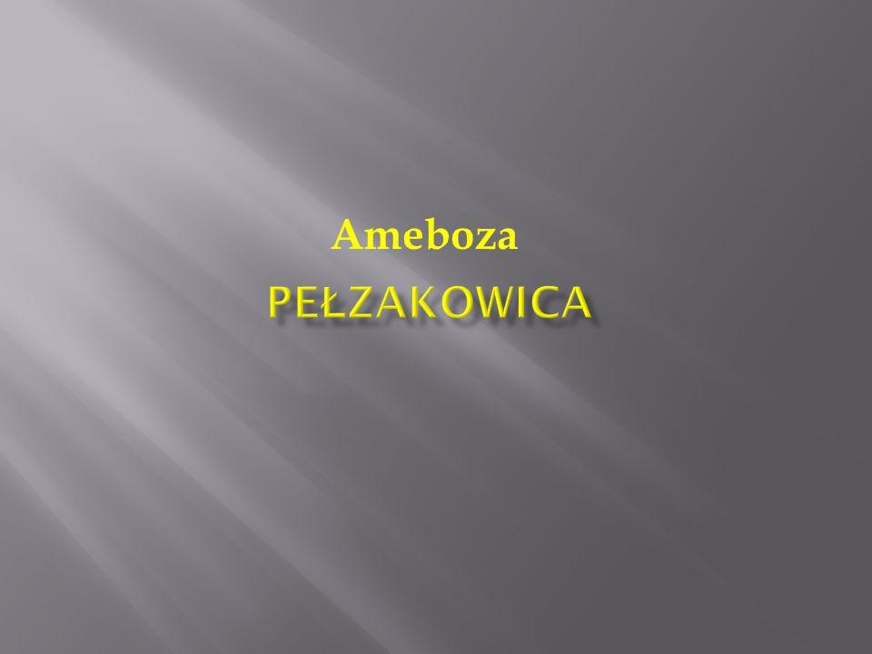 Ameboza