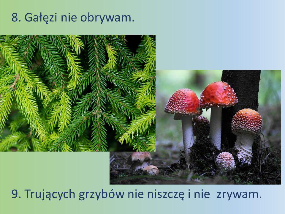 10.Sarny, zające mnie się nie boją, bo ich nie straszę i daję im żyć w lesie w spokoju.