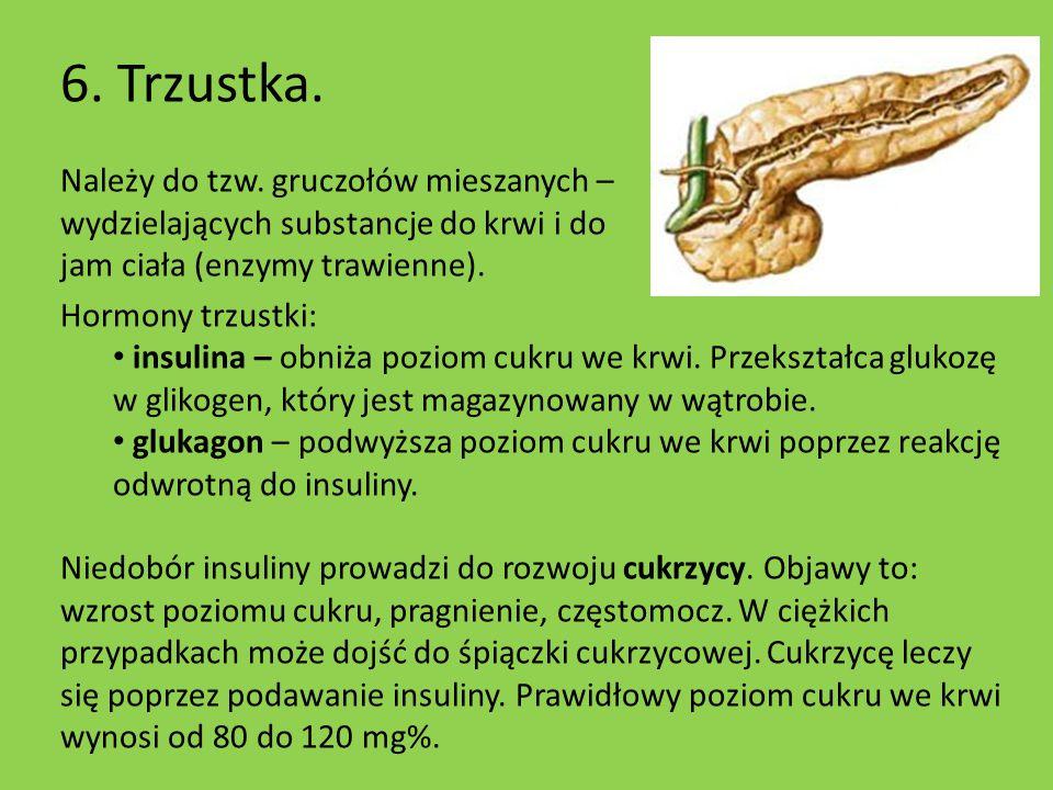 6. Trzustka. Należy do tzw. gruczołów mieszanych – wydzielających substancje do krwi i do jam ciała (enzymy trawienne). Hormony trzustki: insulina – o
