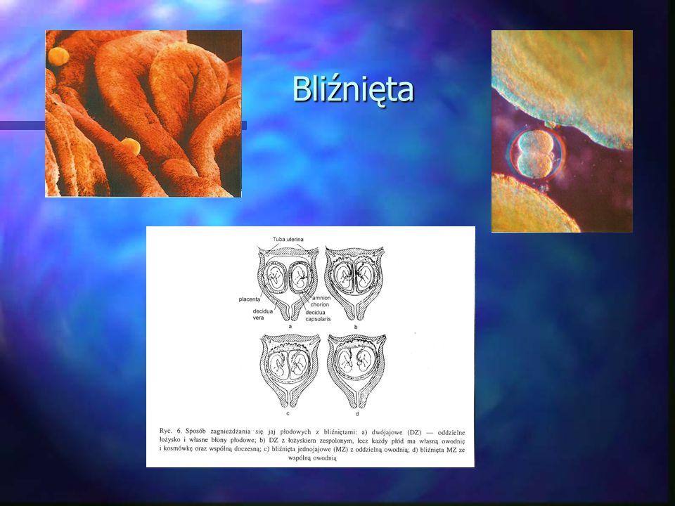 Okres płodowy Dziesiąty tydzień Pęcherzyk żółciowy rozpoczyna produkcję żółci; szpik kostny – krwi.