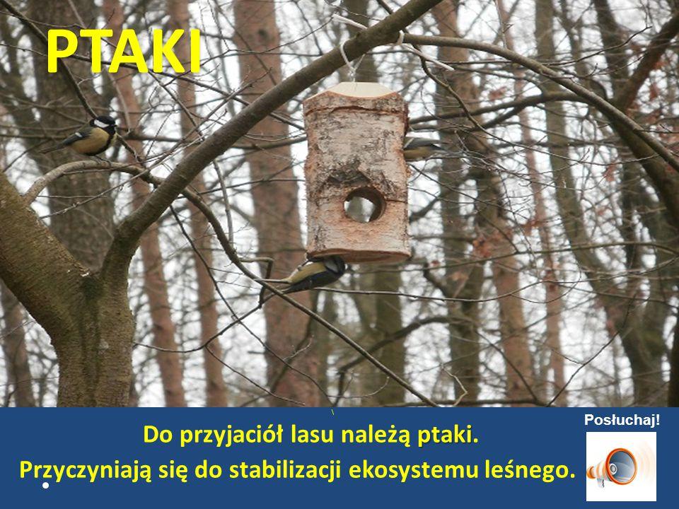 PTAKI \ ptaki Do przyjaciół lasu należą ptaki.Przyczyniają się do stabilizacji ekosystemu leśnego.
