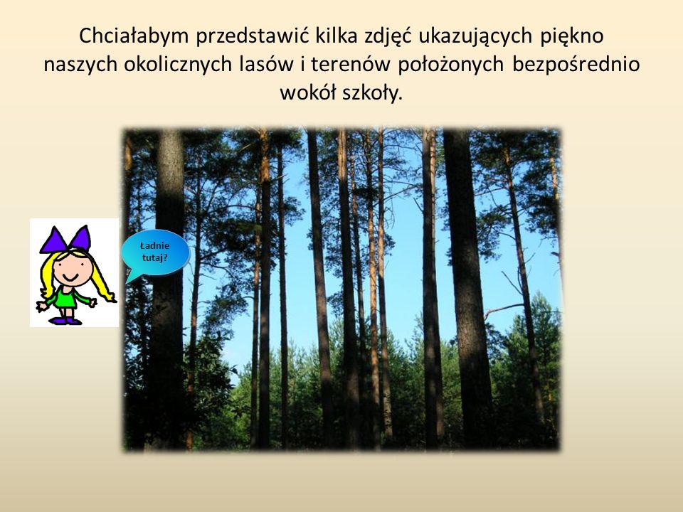 Chciałabym przedstawić kilka zdjęć ukazujących piękno naszych okolicznych lasów i terenów położonych bezpośrednio wokół szkoły.