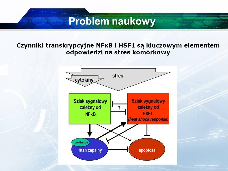 www.themegallery.com Company Logo Problem naukowy Czynniki transkrypcyjne NFκB i HSF1 są kluczowym elementem odpowiedzi na stres komórkowy