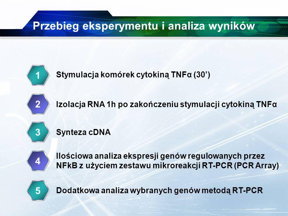 www.themegallery.com Company Logo Przebieg eksperymentu i analiza wyników 1 2 33 44 Stymulacja komórek cytokiną TNFα (30') Izolacja RNA 1h po zakończeniu stymulacji cytokiną TNFα Synteza cDNA Ilościowa analiza ekspresji genów regulowanych przez NFkB z użyciem zestawu mikroreakcji RT-PCR (PCR Array) 35 Dodatkowa analiza wybranych genów metodą RT-PCR