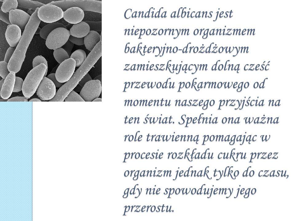 Candida albicans jest niepozornym organizmem bakteryjno-drożdżowym zamieszkującym dolną cześć przewodu pokarmowego od momentu naszego przyjścia na ten