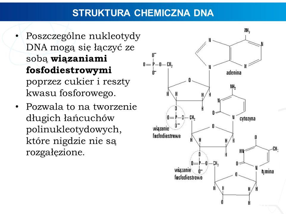 STRUKTURA CHEMICZNA DNA 10 Poszczególne nukleotydy DNA mogą się łączyć ze sobą wiązaniami fosfodiestrowymi poprzez cukier i reszty kwasu fosforowego.