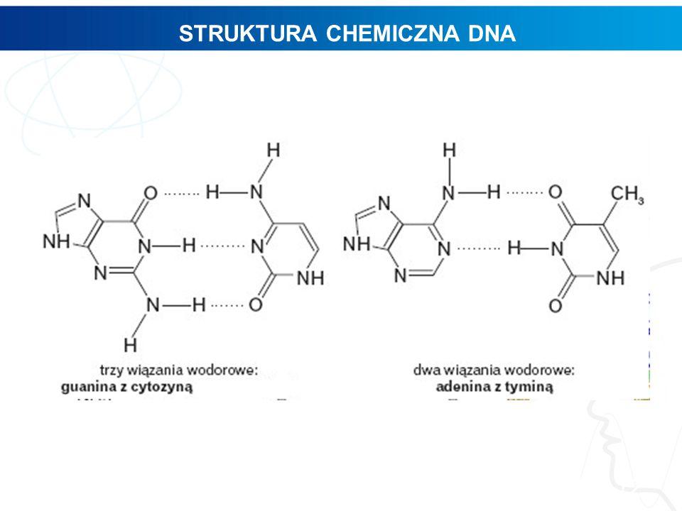 STRUKTURA CHEMICZNA DNA 12