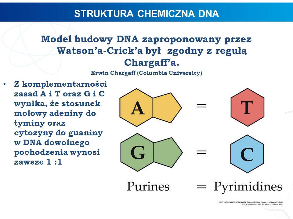 STRUKTURA CHEMICZNA DNA Model budowy DNA zaproponowany przez Watson'a-Crick'a był zgodny z regułą Chargaff'a. Erwin Chargaff (Columbia University) Z k