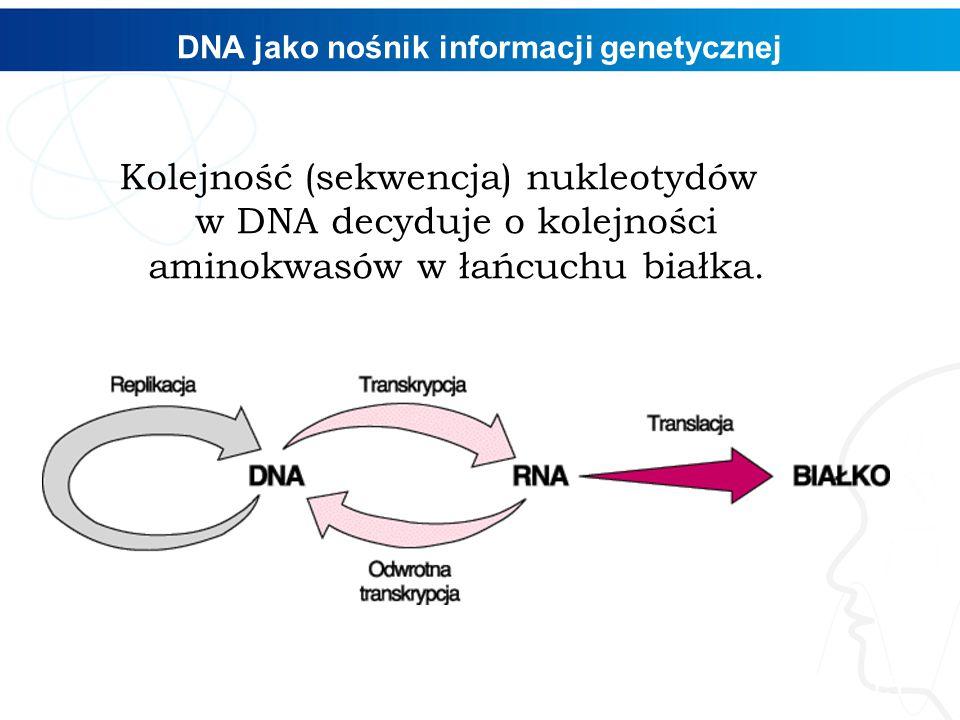 DNA jako nośnik informacji genetycznej Kolejność (sekwencja) nukleotydów w DNA decyduje o kolejności aminokwasów w łańcuchu białka. 15