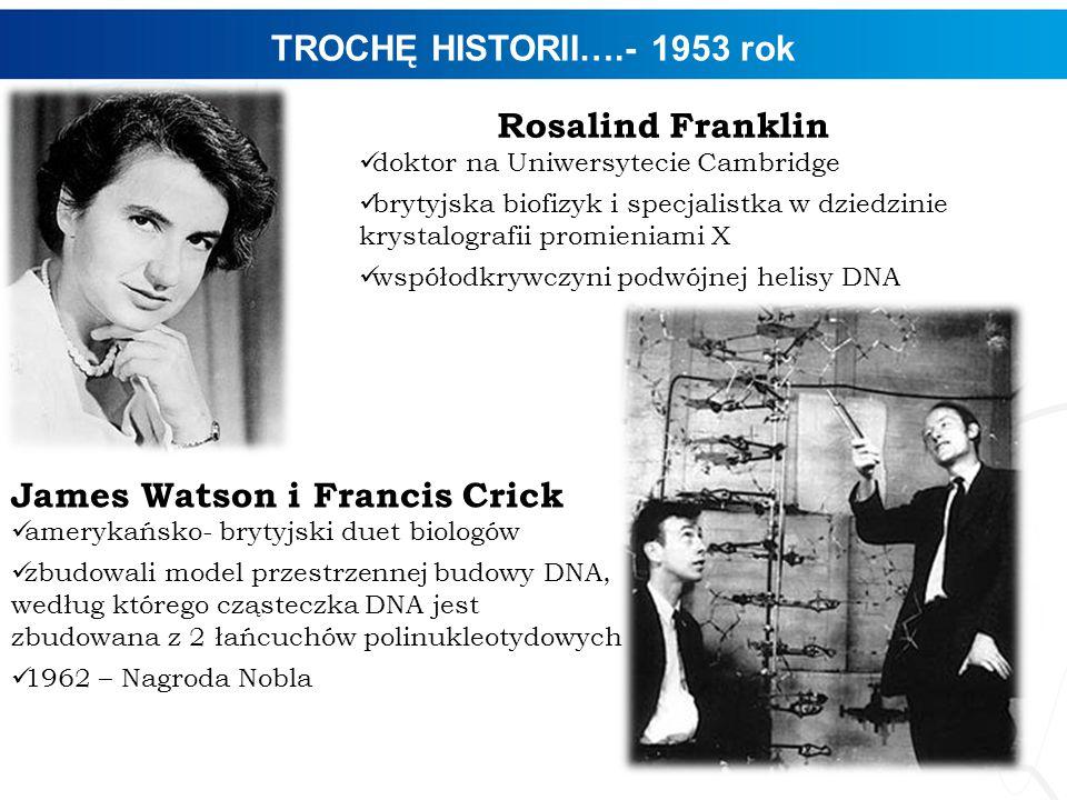 TROCHĘ HISTORII….- 1953 rok 4 Rosalind Franklin doktor na Uniwersytecie Cambridge brytyjska biofizyk i specjalistka w dziedzinie krystalografii promie