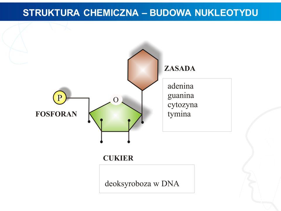 STRUKTURA CHEMICZNA – BUDOWA NUKLEOTYDU 7
