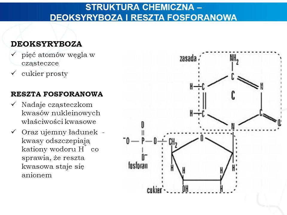STRUKTURA CHEMICZNA – DEOKSYRYBOZA I RESZTA FOSFORANOWA 8 DEOKSYRYBOZA pięć atomów węgla w cząsteczce cukier prosty RESZTA FOSFORANOWA Nadaje cząstecz