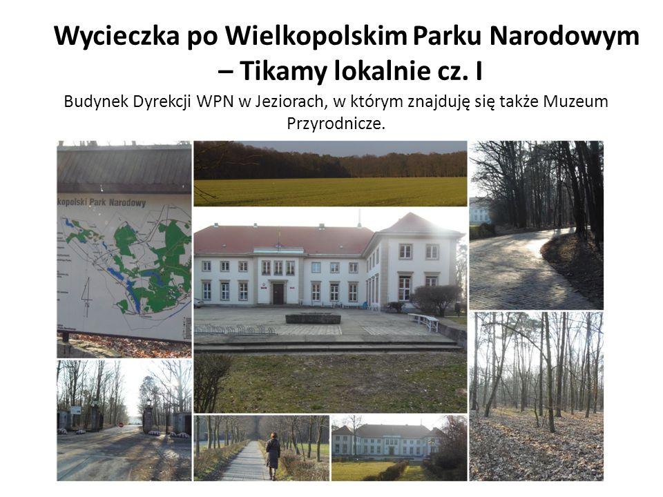 Budynek Dyrekcji WPN w Jeziorach, w którym znajduję się także Muzeum Przyrodnicze. Wycieczka po Wielkopolskim Parku Narodowym – Tikamy lokalnie cz. I