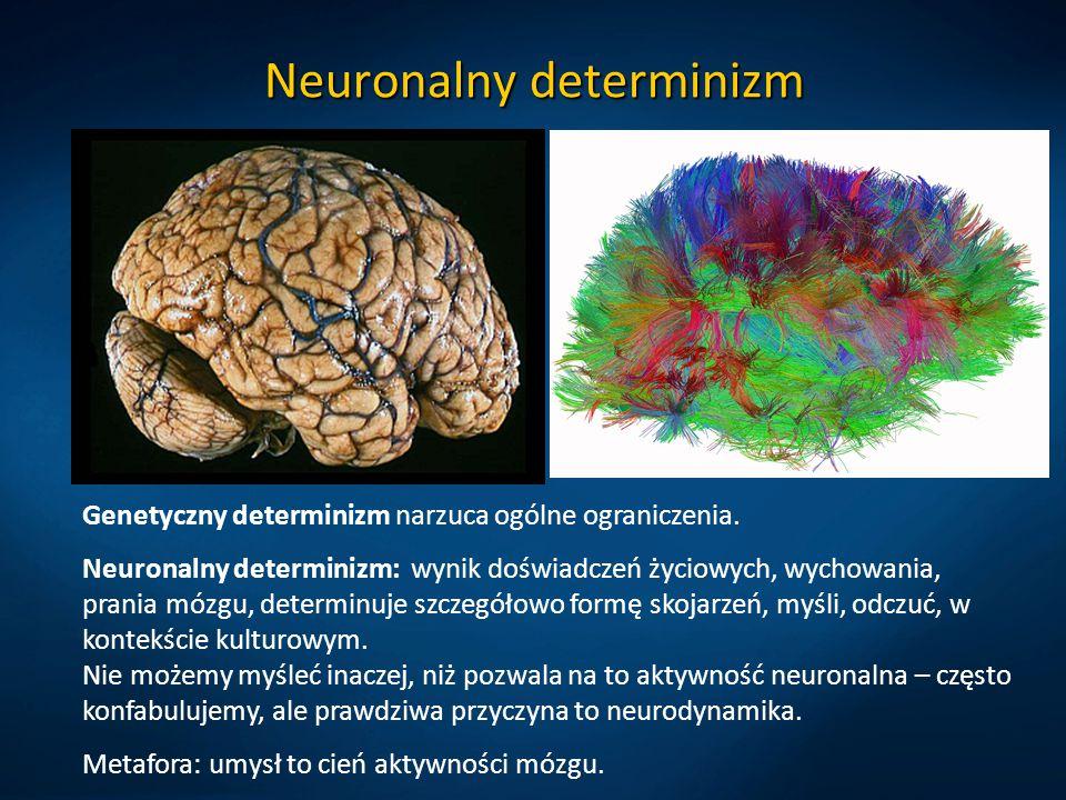 Neuronalny determinizm Genetyczny determinizm narzuca ogólne ograniczenia. Neuronalny determinizm: wynik doświadczeń życiowych, wychowania, prania móz